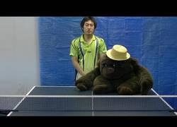 Enlace a Nuestro profesor de tenis de mesa favorito esta vez imparte clases con un compañero muy especial
