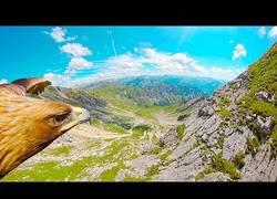 Enlace a El gran viaje por los Alpes a bordo de este águila