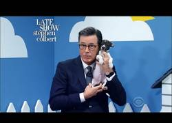 Enlace a Stephen Colbert y Ellie Kemper (The Office, Kimmy Schmidt)  te convencen para que adoptes perros