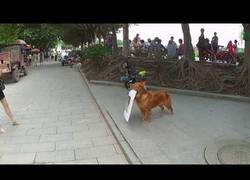 Enlace a Este perro sale a las calles a promocionar el restaurante de su dueño