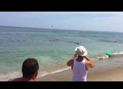 Enlace a El caos llega a las playas de Massachusetts tras el ataque de un tiburón a una foca
