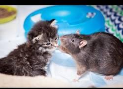Enlace a La cafetería de Brooklyn que usa a ratas para cuidar a los gatos