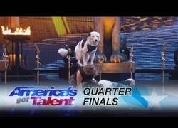 Enlace a El público y el jurado de America's Got Talent se quedó boquiabierto al ver esta actuación de esta c