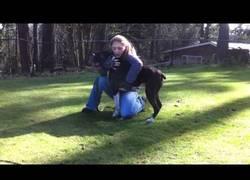 Enlace a Los pasos que debes seguir si a tu perro se le para el corazón