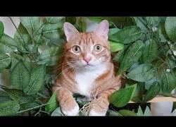 Enlace a ¿Por qué los gatos aman tanto los árboles? [Inglés]