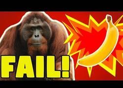 Enlace a El oranguntán que provoca fails