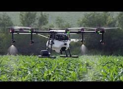 Enlace a Primero replantando desiertos, ahora fumigando con drones, estos Chinos...