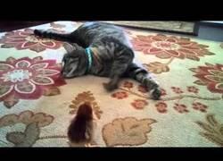 Enlace a Este gatito acaba de conocer a su mejor amigo pollito