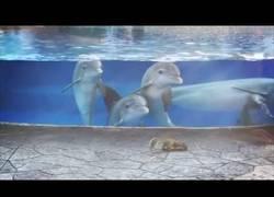 Enlace a Estos delfines están fascinados al ver a unas ardillas merodear por allí al lado