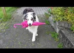 Enlace a La adorable coreografía de este perro te robará el corazón
