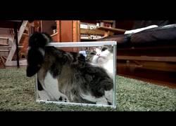 Enlace a Este gato se adapta a cualquier superficie