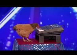 Enlace a Esta gallina sorprende al público tocando el piano en America's Got Talent
