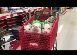 Enlace a El carrito de la compra más adorable