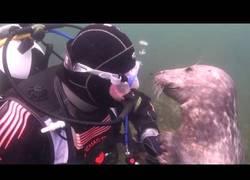 Enlace a El adorable comportamiento de esta foca al encontrarse con un humano bajo el agua