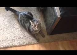 Enlace a El tremendo enfado de este gato con su dueño tras acariciar a otro