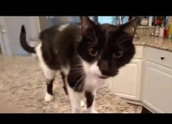 Enlace a El gato con la voz más grave