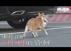 Enlace a La bonita historia del gato que solo aceptaba comida envuelta en una bolsita