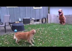 Enlace a El increíble encuentro entre un perro y un dinosaurio