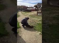 Enlace a Este perro se reúne con su dueño tres años después, tarda en reconocerlo y cuando lo hace es EMOCIONANTE