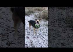 Enlace a Este perro tiene hambre y cree que puede alimentarse de copos de nieve