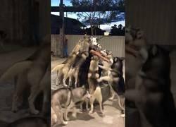 Enlace a Perros dando la bienvenida a su nueva casa a un perro-humano