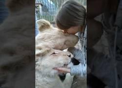 Enlace a El gran amor que se tiene esta chica con unas leonas