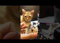 Enlace a Este gato se despierta nada más escuchar la lata de su comida favorita