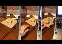 Enlace a Este gato trata de robarse un trozo de pan escondido tras el portátil