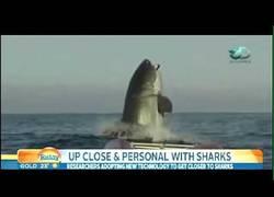 Enlace a Localizan al tiburón más grande jamás visto y los presentadores de TV alucinan al verlo