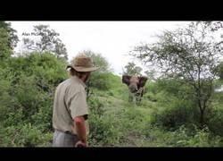 Enlace a Alan McSmith se pone frente a frente con un elefante furioso