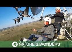 Enlace a La gran experiencia de volar con aves