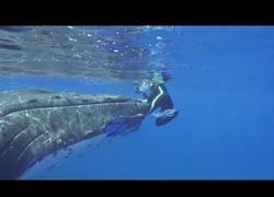 Enlace a Captan el momento en el que una ballena salva a un hombre del ataque de un tiburón