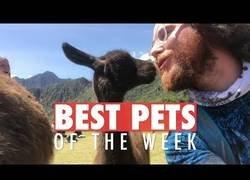 Enlace a Las mejores mascotas de la semana que te robarán el corazón