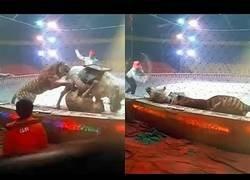 Enlace a El terrible ataque de este león a un caballo en un circo Chino