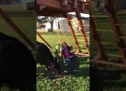 Enlace a La vaquita que le encanta jugar con niños empujando el columpio