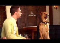 Enlace a Una estrella de cine perruna demuestra el arte de la actuación canina