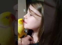Enlace a El adorable periquito que habla y da besos de buenas noches a su dueña