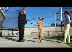 Enlace a El perro que sabe saltar a la comba mejor que tú entrenando toda la vida
