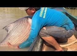 Enlace a Las mayores monstruosidades que puedes pescar en los ríos del Amazonas