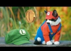 Enlace a La versión adorable de Super Mario Bros.