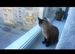 Enlace a El gato totalmente psicótico perdido que da miedo con su risa