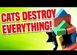 Enlace a Recopilación de gatos que destrozan cosas