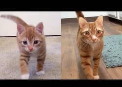 Enlace a Los gatos siempre serán los mismos con el paso de los años