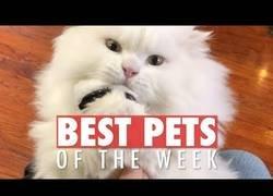 Enlace a Los animales de compañía más adorables de la última semana