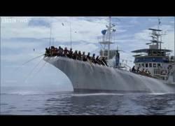 Enlace a Esta es la curiosa forma con la que pescan atunes en el Pacífico Sur