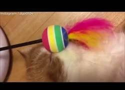 Enlace a No por mucha tecnología un gato se divertirá más con un juguete