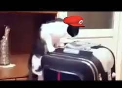 Enlace a Super Mario si fuera un gato