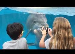 Enlace a Hablando con los delfines
