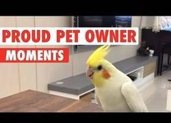 Enlace a Momentos en los que tu animal de compañía te hace sentir orgulloso
