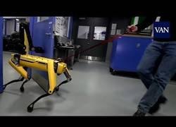 Enlace a La respuesta al matrato a los robots de Boston Dynamics